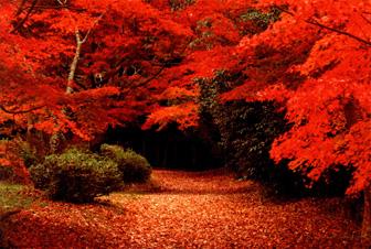 秋になると紅葉が美しい