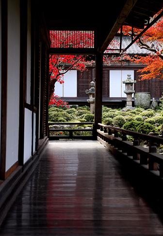 中庭の紅葉を望む