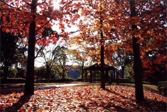 秋になると紅葉