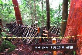 椎茸の栽培場所